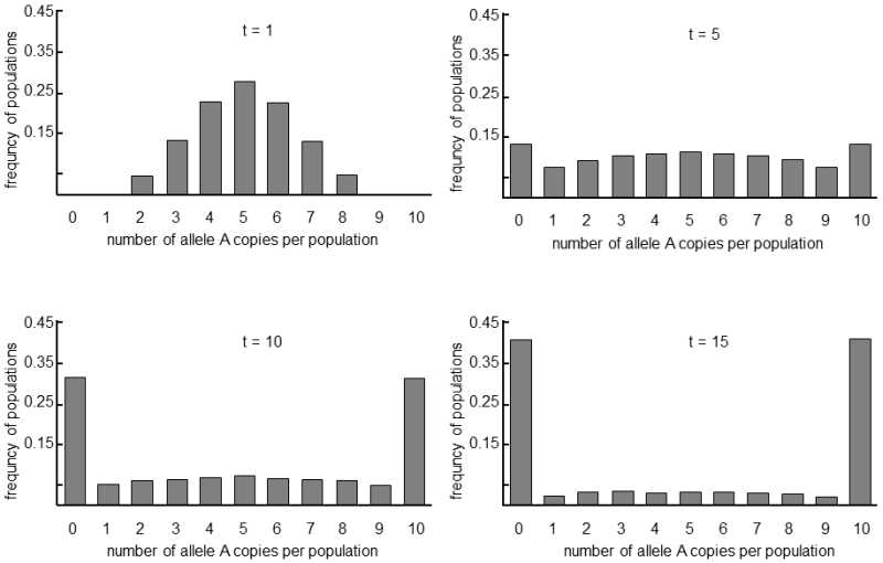 v 2 in populations of finite size genetic drift leads to fixation