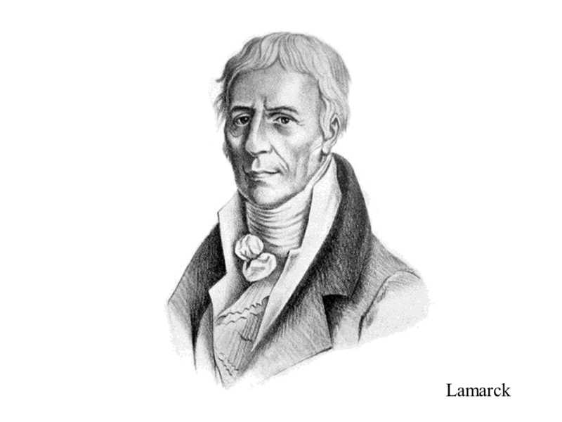 XXVIII.2 Lamarck is arguably the most important representative of ...